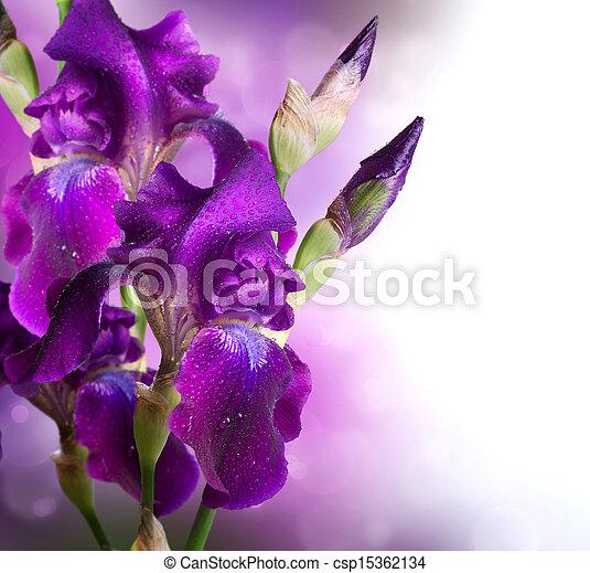 vacker, iris, blomma, konst, viol blommar, design. - csp15362134