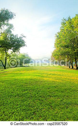 vacker, lätt, parkera, morgon, fält, grönt gräs, publik - csp23587520