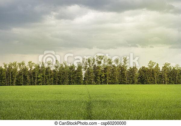 vacker, lätt, parkera, träd, morgon, fält, grönt gräs, publik - csp60200000
