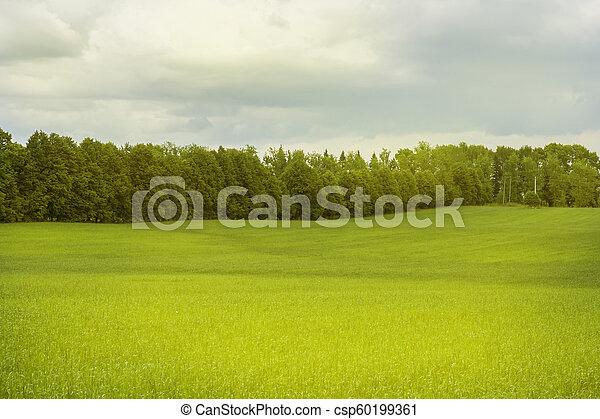 vacker, lätt, parkera, träd, morgon, fält, grönt gräs, publik - csp60199361