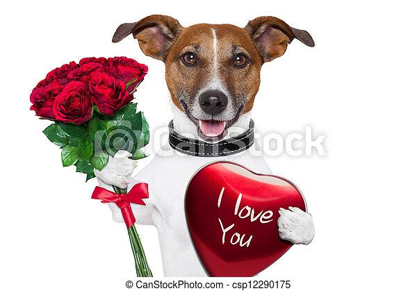 valentine dog - csp12290175