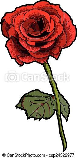 Valentine Rose - csp24522977
