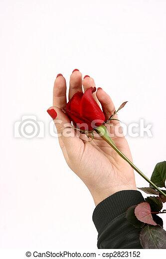 valentine\'s, jour - csp2823152