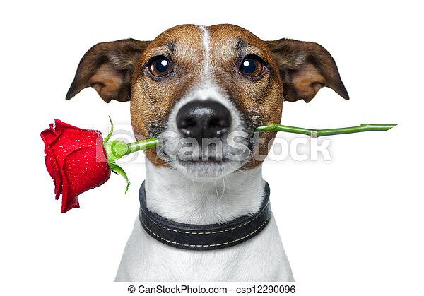 valentines, perro - csp12290096