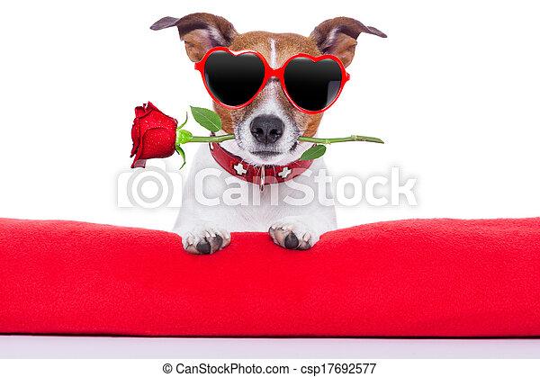 valentinkort dag, hund - csp17692577