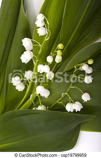 Lily del valle - csp19799959