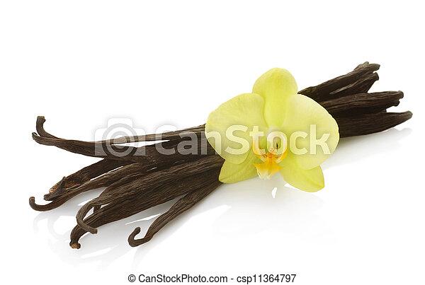 Vanilla Over White - csp11364797