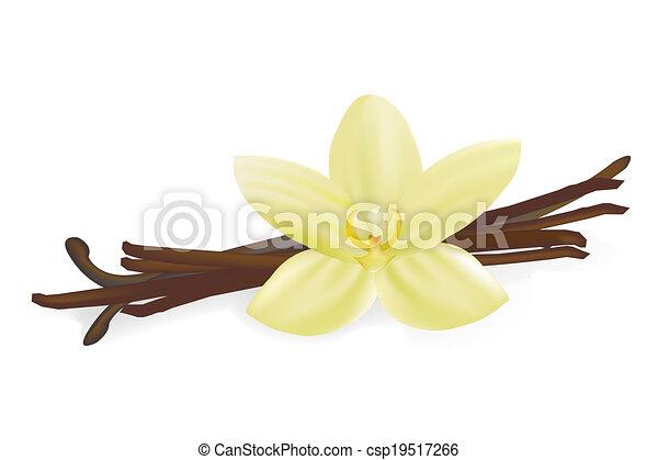 vanille, fleur, boîtiers - csp19517266
