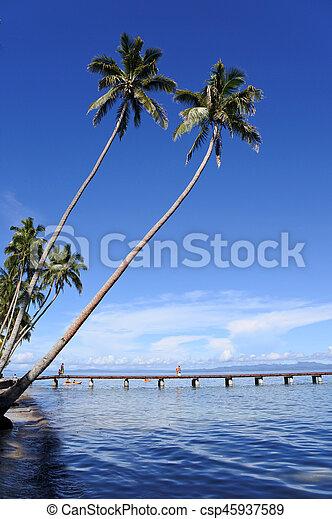 vanua, spiaggia, levu, isola tropicale, figi, paesaggio - csp45937589