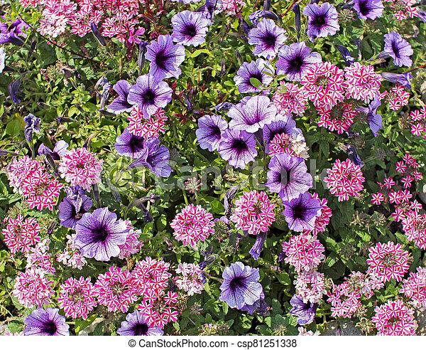 Variety of blooming flowers - csp81251338