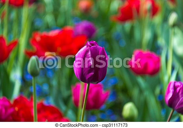 Variety of colorful flowers in bloom - csp31117173