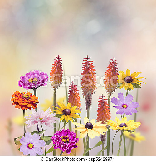 Variety of colorful flowers - csp52429971