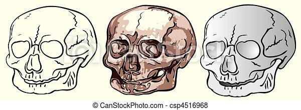 various human skulls - vector - csp4516968