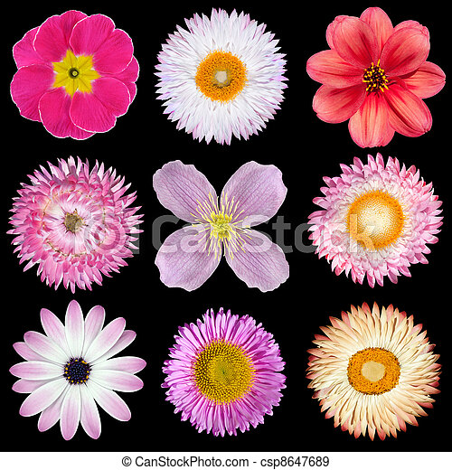 Various Pink, Red, White Flowers Isolated on Black - csp8647689