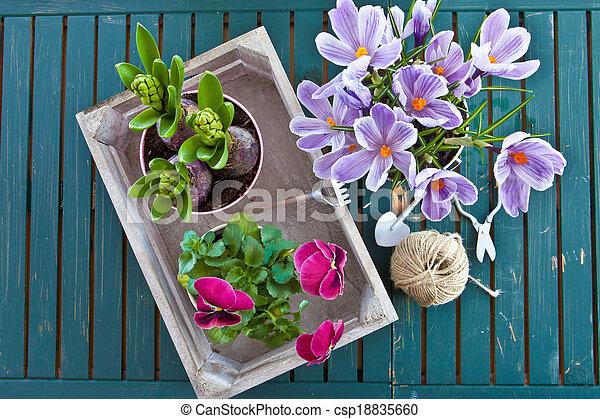 Various potted spring flowers in vintage wooden box stock image various potted spring flowers csp18835660 mightylinksfo