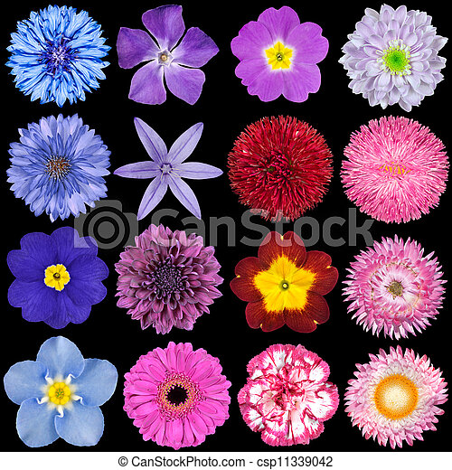 Various red pink blue and purple flowers isolated on black big various red pink blue and purple flowers isolated on black csp11339042 mightylinksfo