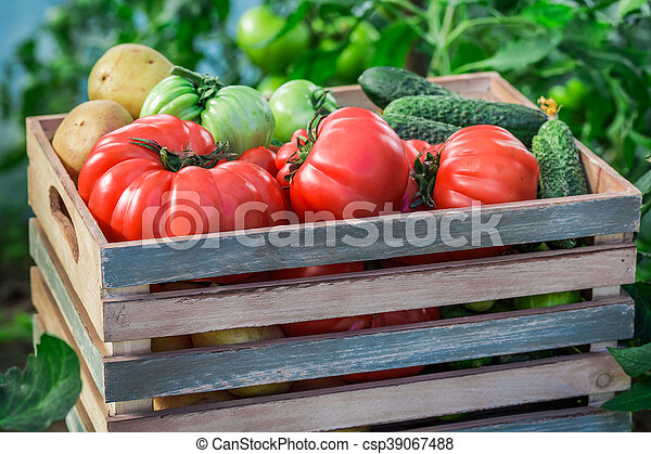 Various tomatoes and cucumbers in greenhouse - csp39067488