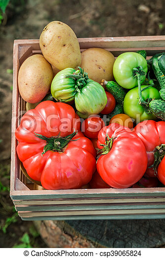 Various tomatoes and cucumbers in wooden box - csp39065824