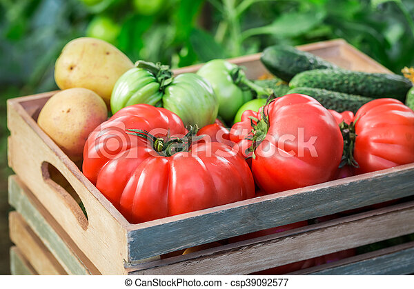 Various tomatoes and cucumbers to groceries - csp39092577