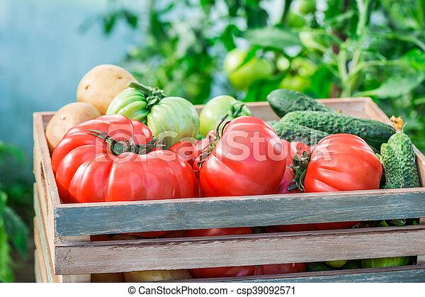 Various vegetables in greenhouse - csp39092571