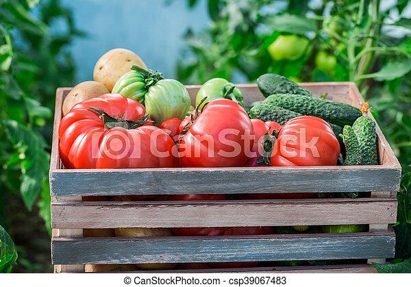 Various vegetables in greenhouse - csp39067483