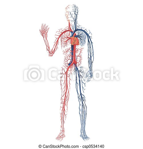 Vascular System A High Detailed Illustration Stock Illustration