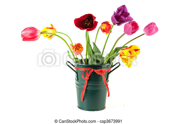 Vase With Colorful Tulips Vase With Colorful Dutch Tulips On White