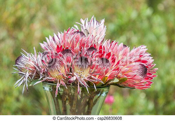 Vase with protea flowers - csp26830608
