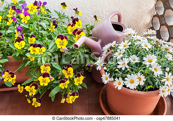 Vases Of Flowers Grown On The Terrace Of An Apartment Vases Of