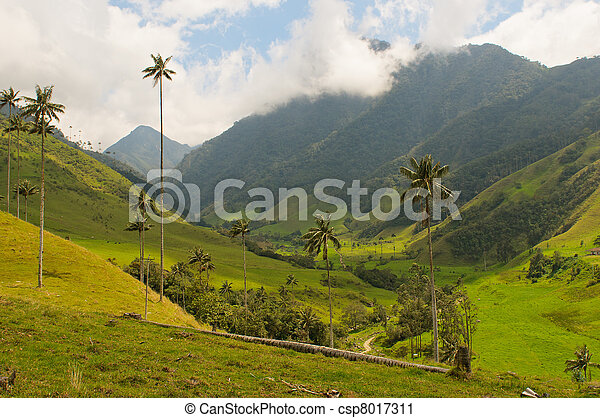 Vax palm trees of Cocora Valley, colombia - csp8017311