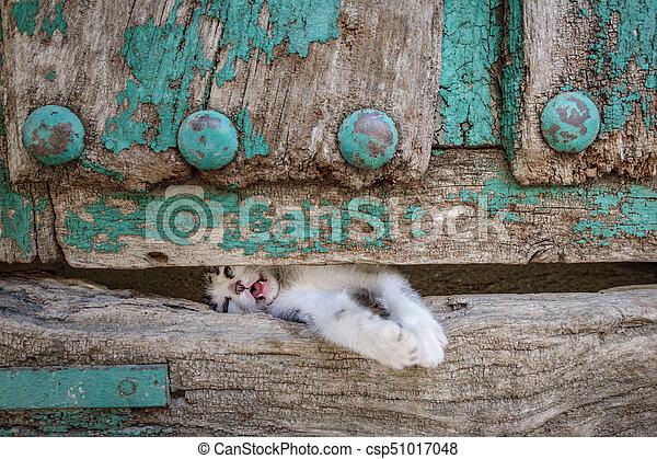 vecchio, gamba, legno, gattino, attraverso, piccolo, porta, buco - csp51017048