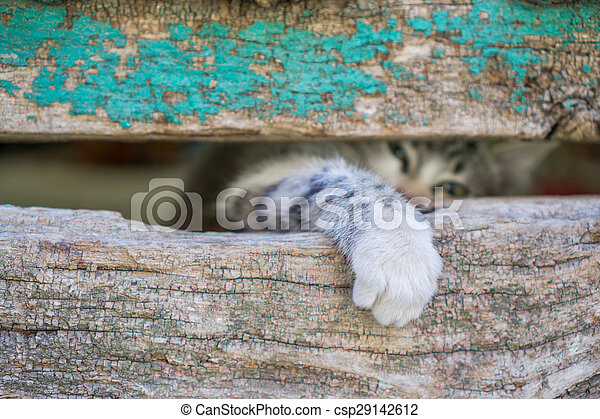 vecchio, gamba, legno, gattino, attraverso, piccolo, porta, buco - csp29142612