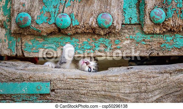 vecchio, legno, gattino, attraverso, fuga, piccolo, porta, buco, tentando - csp50296138