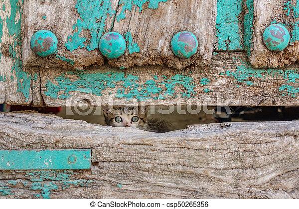 vecchio, legno, gattino, attraverso, piccolo, porta, buco - csp50265356