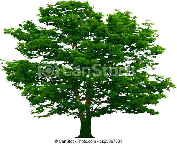 vecteur, arbre - csp3367681