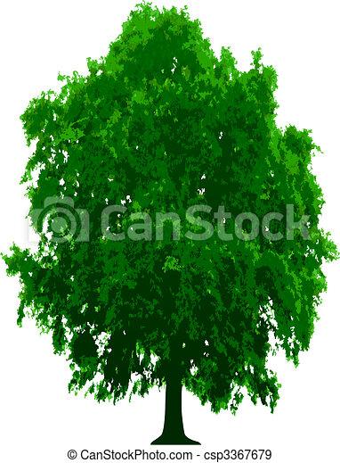 vecteur, arbre - csp3367679
