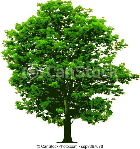 vecteur, arbre - csp3367678