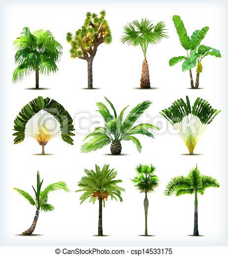 vecteur, arbres., ensemble, paume, divers - csp14533175