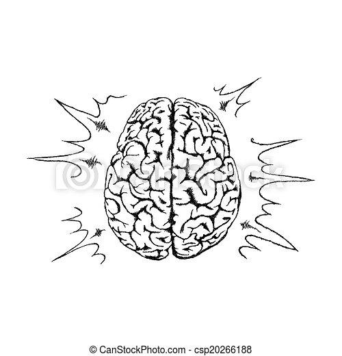 vecteur, brain., concept, créativité, humain - csp20266188