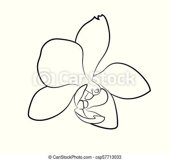 Vecteur Fleur Illustration Orchidée