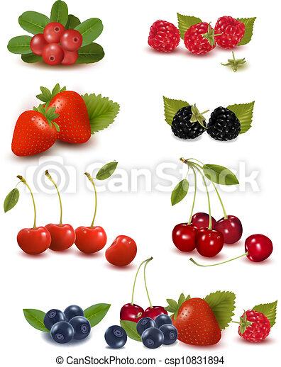 vecteur, frais, grand, groupe, baies, illustration - csp10831894