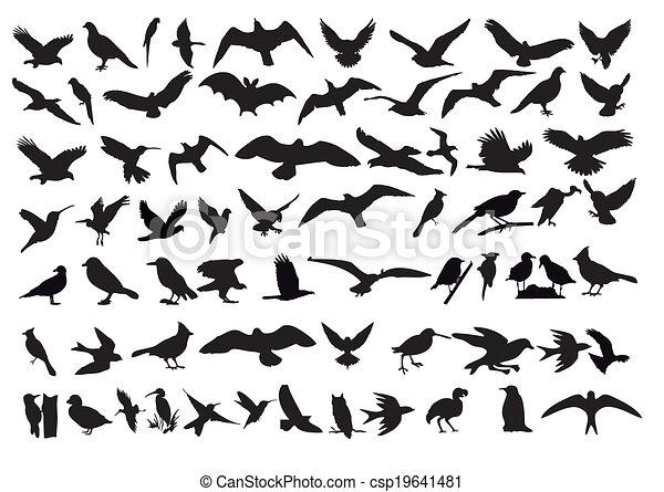 vecteur, oiseaux - csp19641481