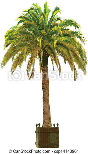vecteur, paume, illustration, arbre - csp14143961