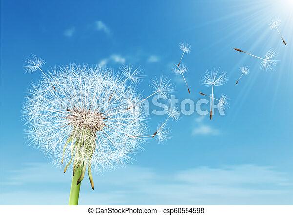 vecteur, pissenlit, voler, ciel, nuageux, graines - csp60554598