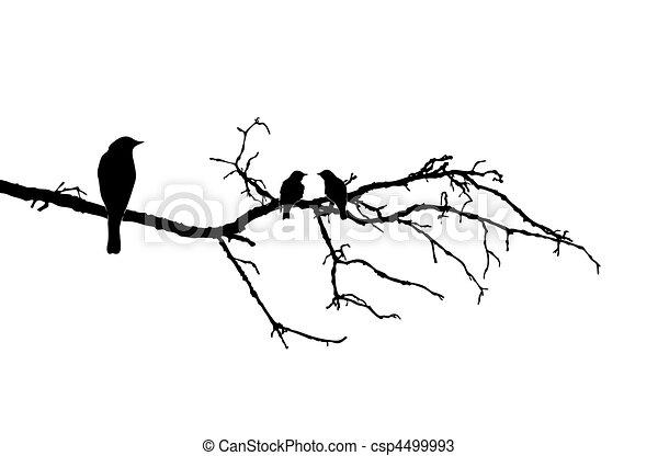 vecteur, silhouette, oiseaux, branche - csp4499993