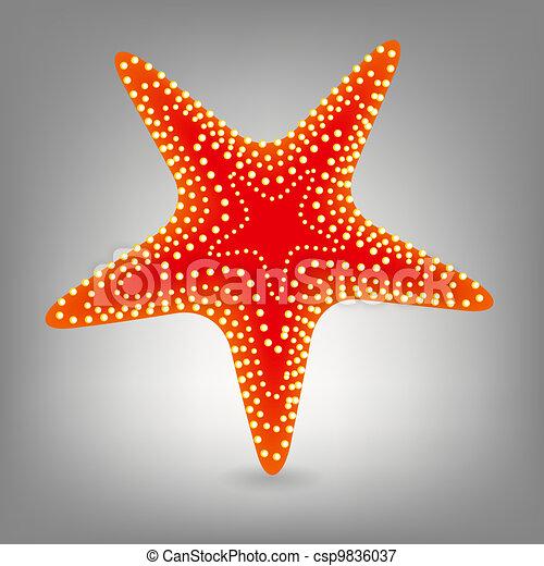 vecteur, starfishe, illustration, icône - csp9836037