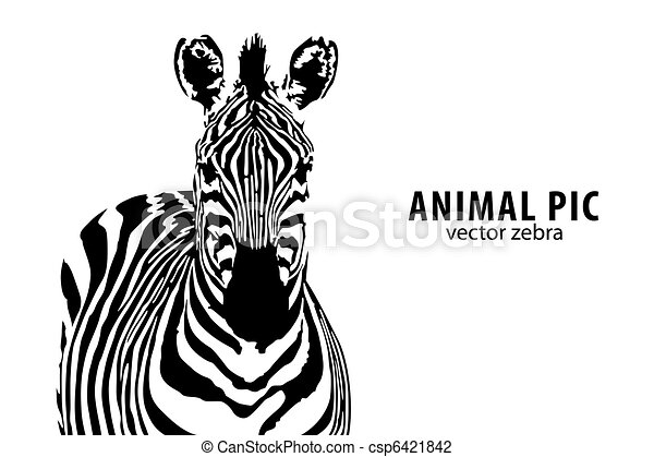 vecteur, zebra - csp6421842