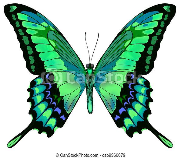 vector, achtergrond, vlinder, mooi, vrijstaand, witte , blauw groen, illustratie - csp9360079