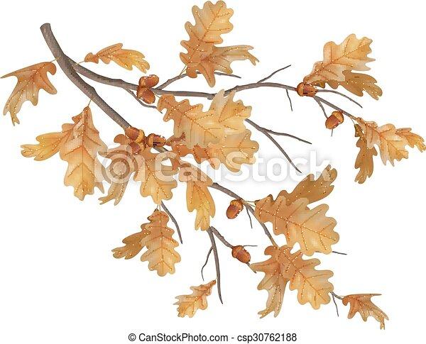 Vector autumn oak leaves branch - csp30762188