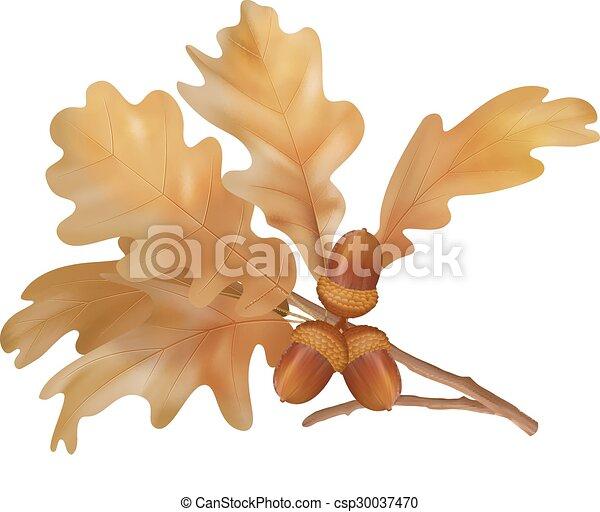 Vector autumn oak leaves - csp30037470